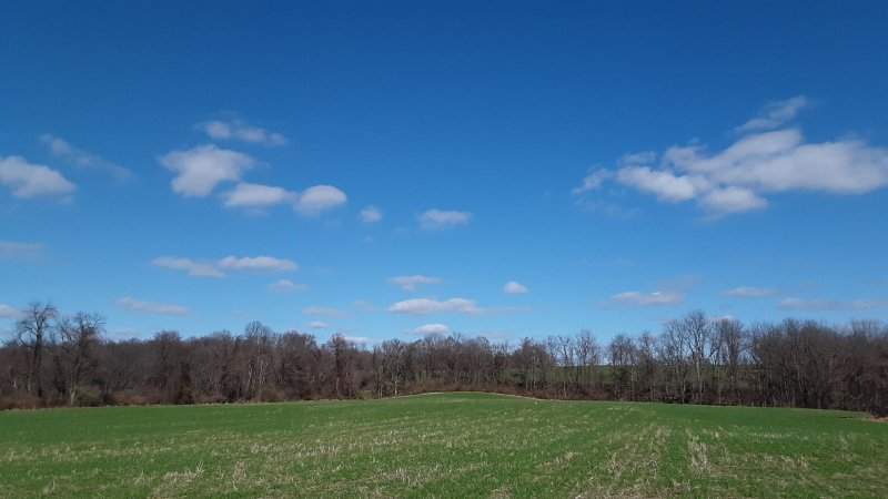 3.24.20 blue skies green fields.jpg