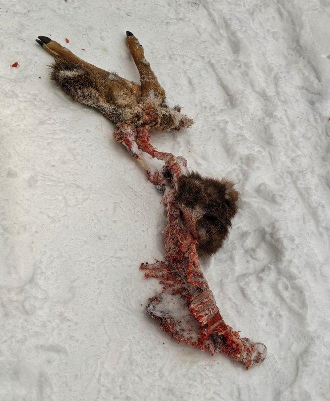 DEAD DEER PXL_20210222_122500419-01.jpg