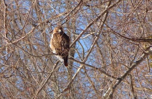 Hawk BL08.jpg