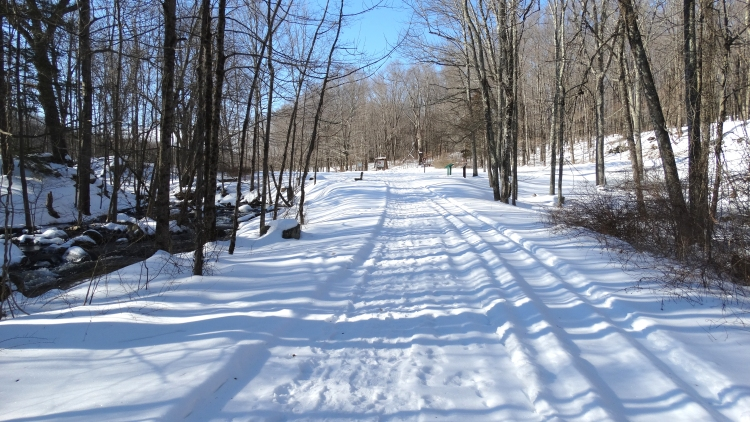 Snowy trails03.jpg