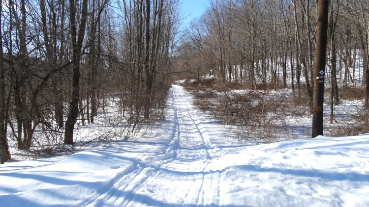 Snowy trails04.jpg