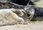 0_CATERS_LAUGHING_SEAL_01-768x549.jpg